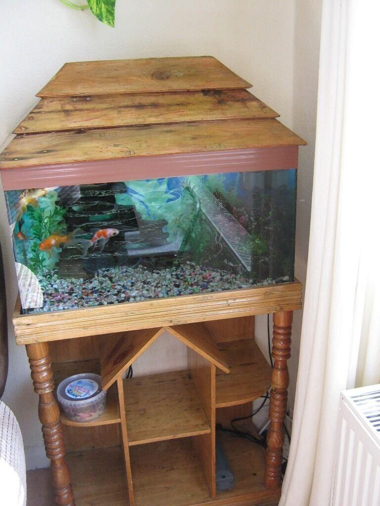 Buy fish for aquarium london - Fish Aquarium