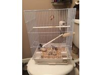 4 zebras finches + cage
