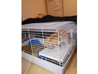 Rabbit and hutch for sale