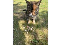 Potential missing cat