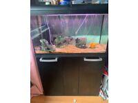 Interpet fish tank