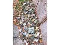 Job lot of flint stones ideal for garden decoration or rockery Free