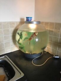 *large fish tank/bowl*