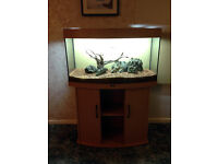 Aquarium - Juwel Vison 180 - complete setup with external filter and planted tank equipment