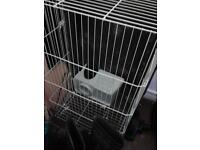 Guinea pigs cage for sale