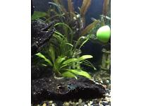 5 colourful guppies