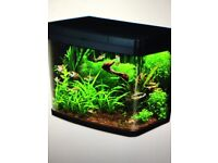 FULL AQUARIUM including plants & decorations, everything you need bar the water & fish