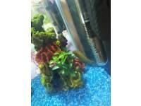 Fish tank,ornaments. Fish: 1 gourami female 4 male guppies