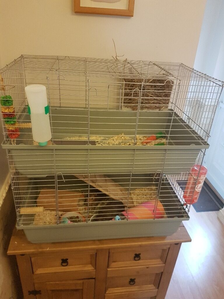 2 tiered guinea pig cage in forest town nottinghamshire for Guinea pig cage for 3