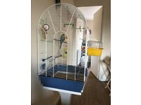 Free budgie with large cage