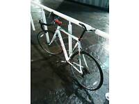 Bike Viking Giro de Italia race for sale