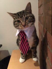 Missing cat - Baylham **NOT FOR SALE**