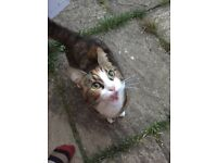 Found loving cat in Epping Green