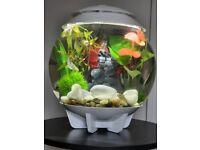 Biorb 30l halo fish tank full set up