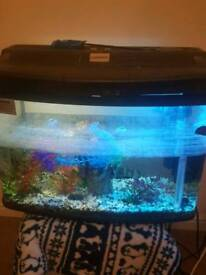 Fish tank with lights and ornaments