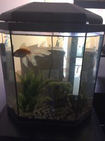 Fish tank comes with one fish