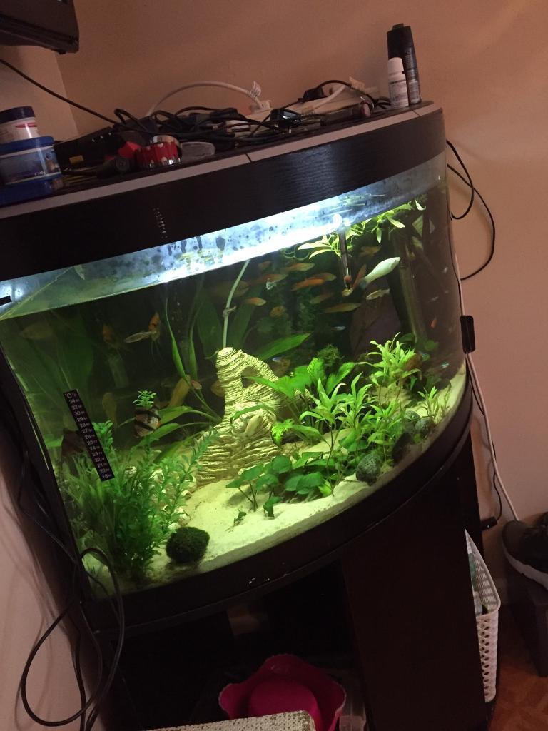 Fish aquarium kidderminster - Image 1 Of 6