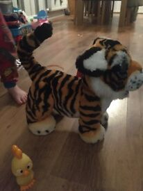 Tyler the tiger