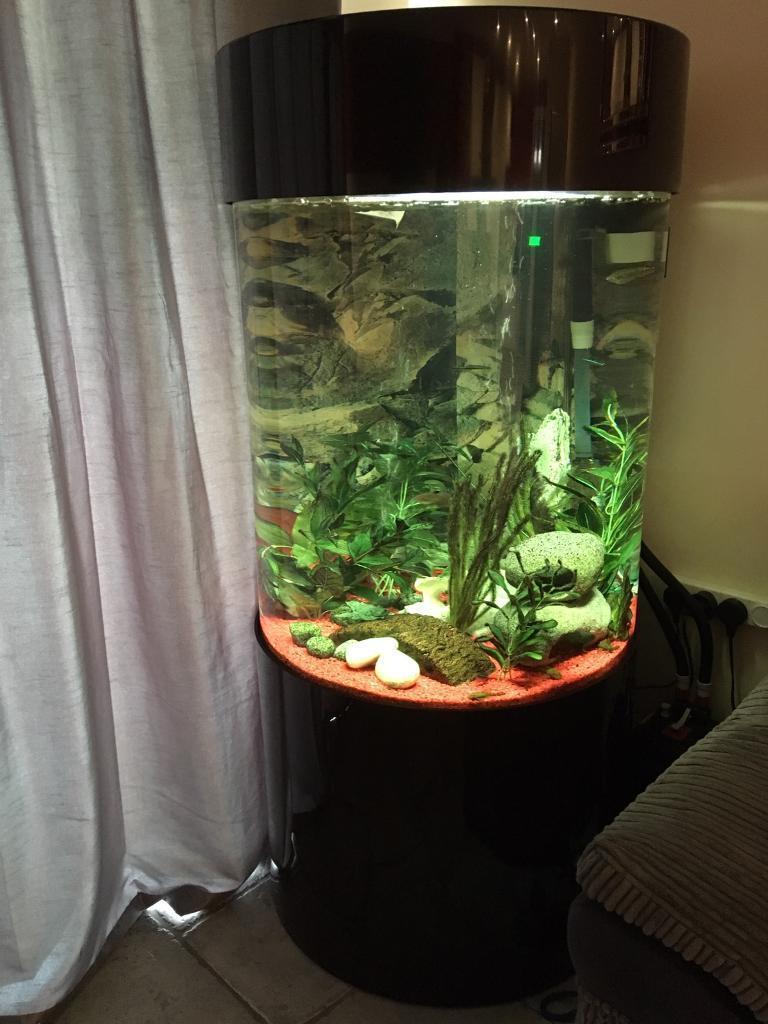 Column aquarium tanks 1000 aquarium ideas for Cylinder fish tank