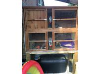 2 female rabbits for rehoming