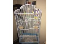 Bird cage with stand and 3 lovely budgies