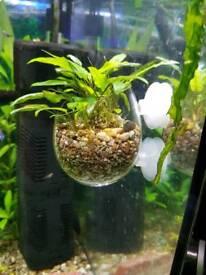 Glass pot with plant aquarium decoration for fish tank