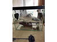 Clear seal 40l fish tank and accessories