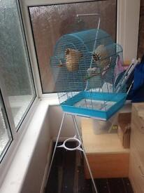 3 Finches birds with cage neat stand food