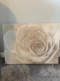 Next canvas rose print