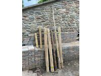 Approximately 270 various size runner bean bamboo canes (used only once from new)