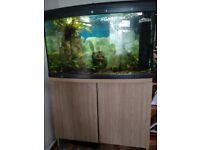 Fish tank inc.fish for sale
