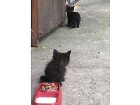 Last two kittens