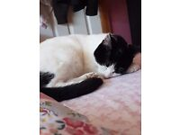 Black and white cat found in mitcham, no collar, must have proof this cat is yours.