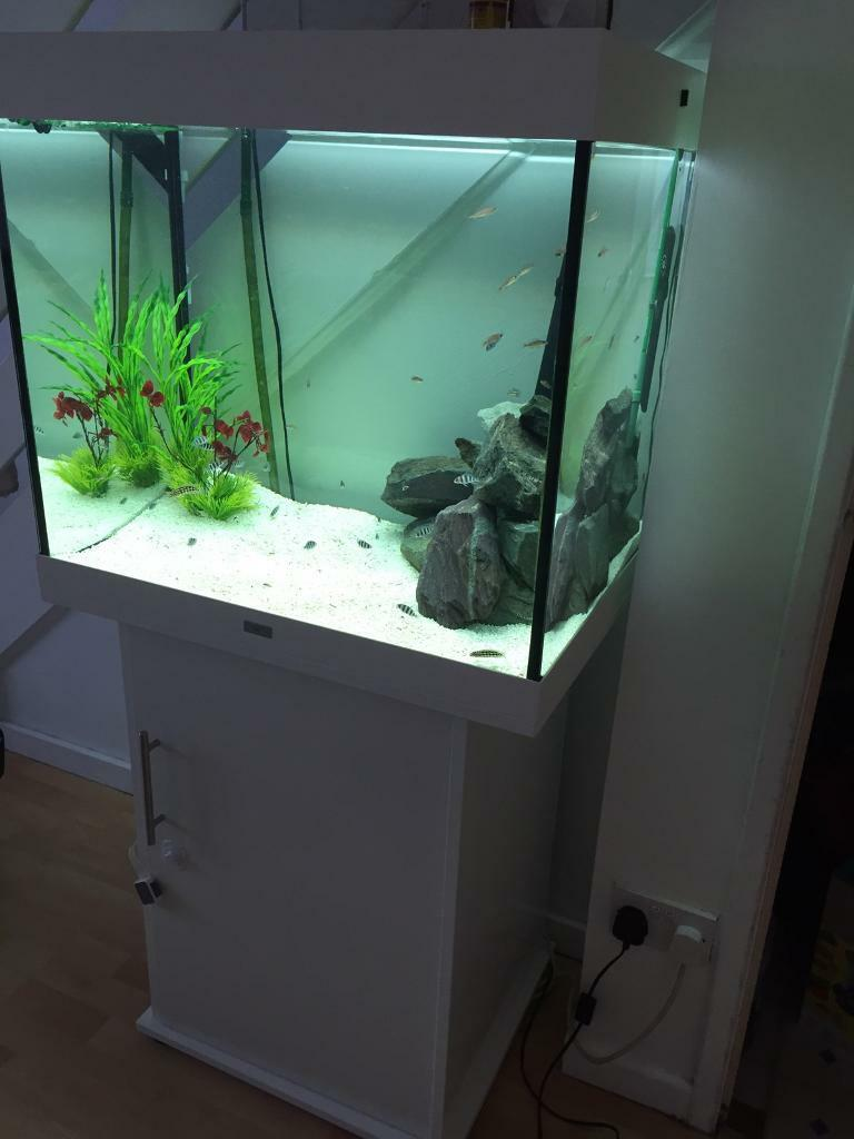 juwel lido 200 white aquarium setup in beckton london gumtree. Black Bedroom Furniture Sets. Home Design Ideas