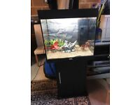 120l Juwel lido fish tank full set up with stand 2 x t5 light filter heater lid sand nice ornament