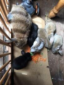Babe bunnies