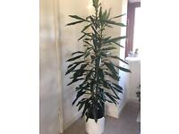 Indoor plants with nice pots