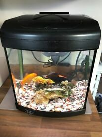 Fish Tank with 3 Goldfish and all accessories needed
