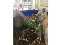 2 Stunning Girl Bunnies
