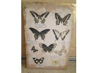 Next butterfly cabvass
