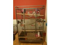 Parrot/rodent cage