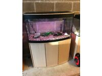 180l fluval bow front fish tank 3 ft long full set up with stand external filter heater light lid mo