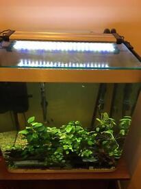 155 litre curved aquarium fish tank