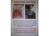 4 month old kitten, lost 😢