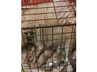 2 blue puppy staffs forsale