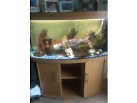 fish tank - two .... one cold water and one 260 litres tropical