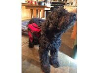 Dog Back Pack for medium/large dog. Let your dog carry your picnic, or just their own water!