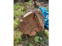 London Plane Trunk for free