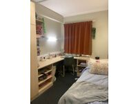 Student room available