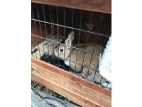 Rabbits looking for good homes